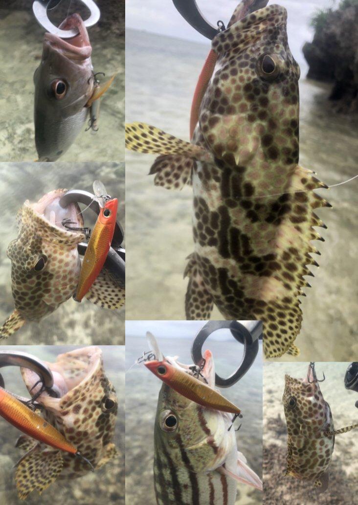 毒モップさんの投稿画像,写っている魚はアミメフエダイ,,クロホシフエダイ,カワハギ