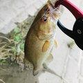 もえさんの埼玉県幸手市での釣果写真
