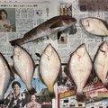 6295.Kさんの北海道でのアイナメの釣果写真