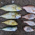きくたろ@週末釣り人さんの福島県での釣果写真