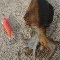 フォーさんの三重県鳥羽市での釣果写真