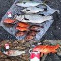 たいたいさんの大分県佐伯市での釣果写真