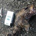 Takashi Matsudaさんの高知県での釣果写真
