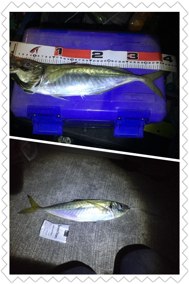 garagemoriさんの投稿画像,写っている魚はアジ
