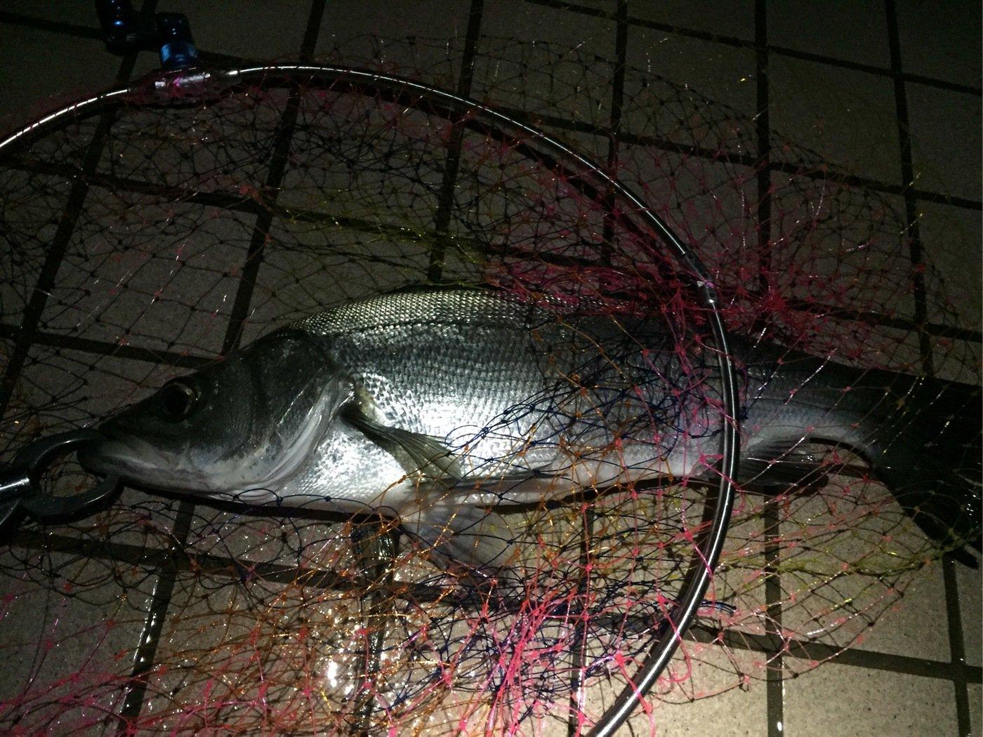 Harryさんの投稿画像,写っている魚はヒラスズキ