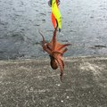 ranpootanさんの大阪府堺市での釣果写真