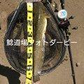 しんパパさんの青森県つがる市での釣果写真