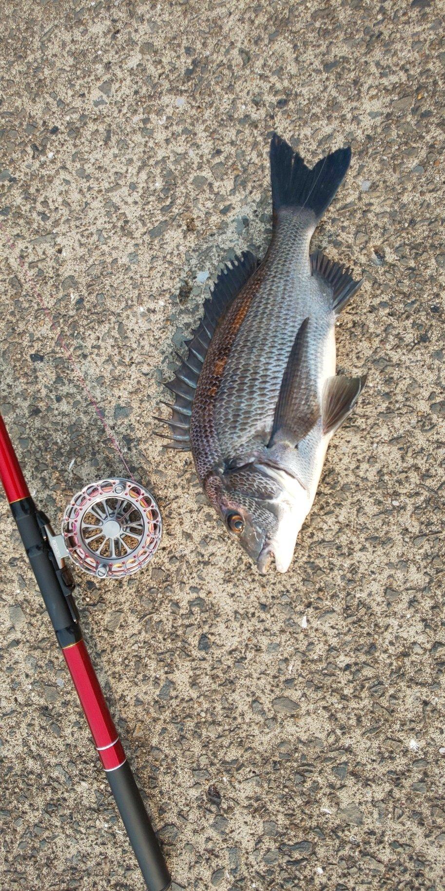 NOAHさんの投稿画像,写っている魚は