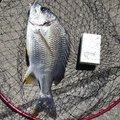 平やんさんの大阪府泉北郡での釣果写真
