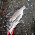 あしかりさんの大分県大分市での釣果写真