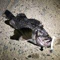 えんがわさんの北海道久遠郡での釣果写真