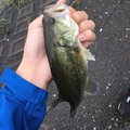 ニゴイさんの千葉県夷隅郡での釣果写真