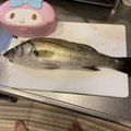 アーキンさんの山口県萩市での釣果写真