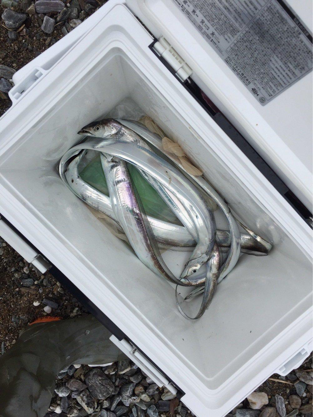あつしさんの投稿画像,写っている魚はタチウオ
