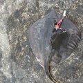 マエビさんの千葉県山武郡での釣果写真