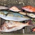 てつさんのヒラマサの釣果写真