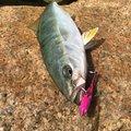 YUUHATSUさんの兵庫県尼崎市での釣果写真