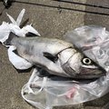 ちびさんの宮崎県での釣果写真