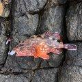 TDMAさんの宮崎県での釣果写真