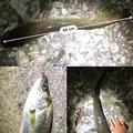 テラざわすさんの徳島県徳島市での釣果写真
