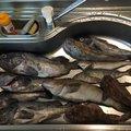Akiさんのホッケの釣果写真