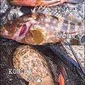 kaito@さんのコウイカの釣果写真