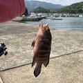 こももっちさんの高知県宿毛市での釣果写真
