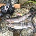 カズさんの長野県駒ヶ根市での釣果写真