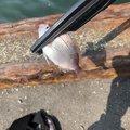クーボーさんの大分県大分市での釣果写真