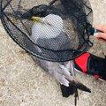 D-lowさんの宮城県石巻市での釣果写真
