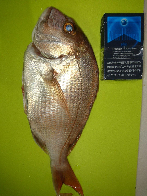 rin82さんの投稿画像,写っている魚は