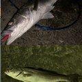 たろうさんの新潟県新潟市での釣果写真