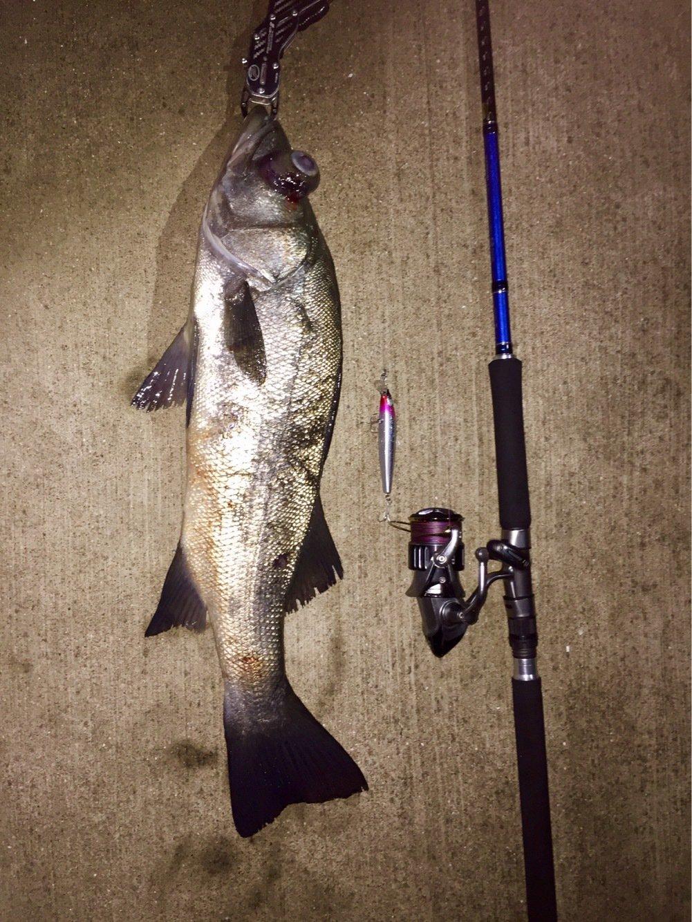 カズワタベさんの投稿画像,写っている魚はヒラスズキ