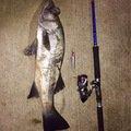 カズワタベさんの長崎県壱岐市でのヒラスズキの釣果写真