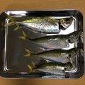 よしおさんの新潟県西蒲原郡での釣果写真