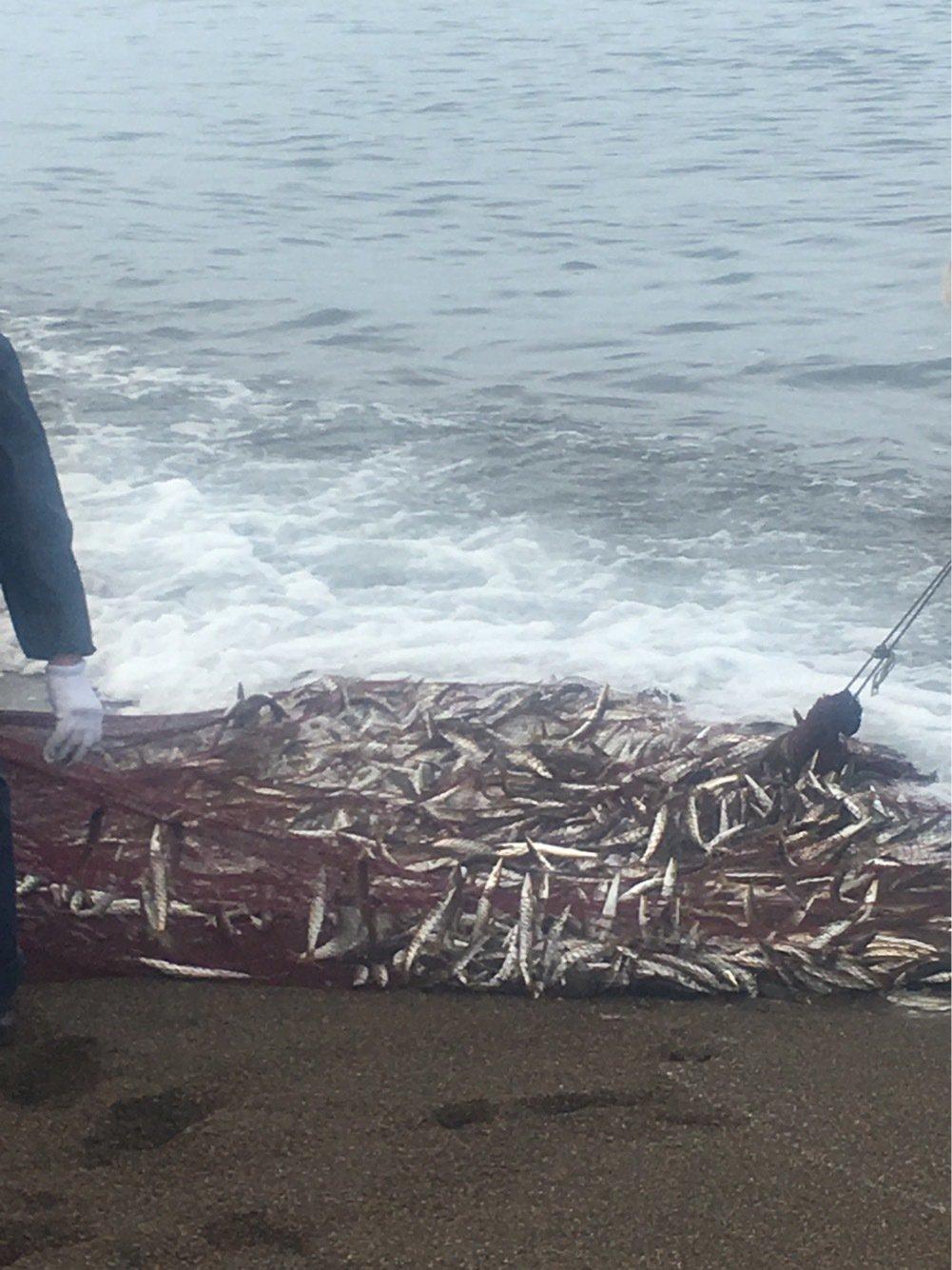 とみっちさんの投稿画像,写っている魚はカマス