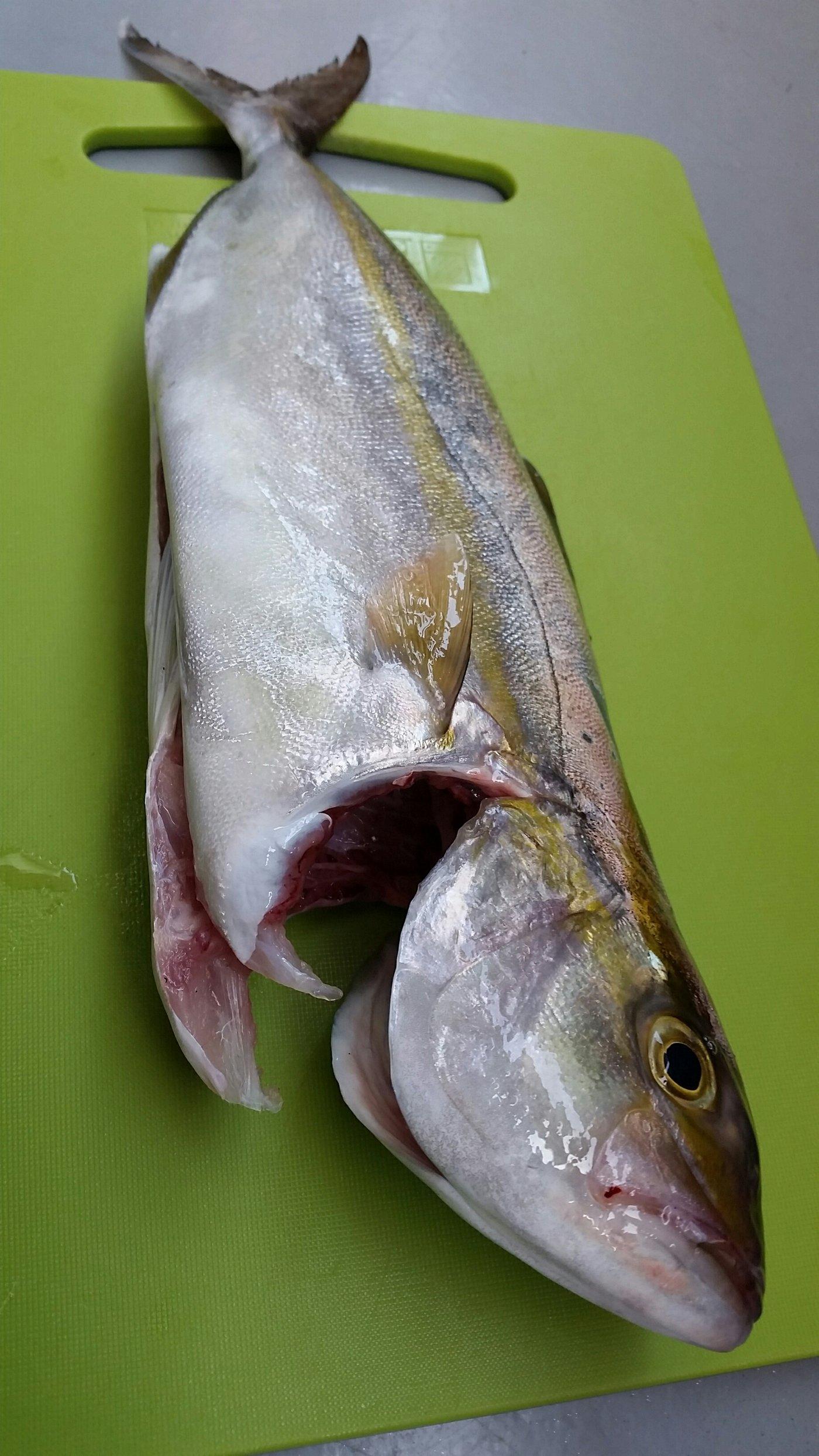 K2さんの投稿画像,写っている魚は