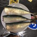 LENさんの兵庫県明石市での釣果写真