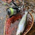 こいさんさんの北海道函館市での釣果写真
