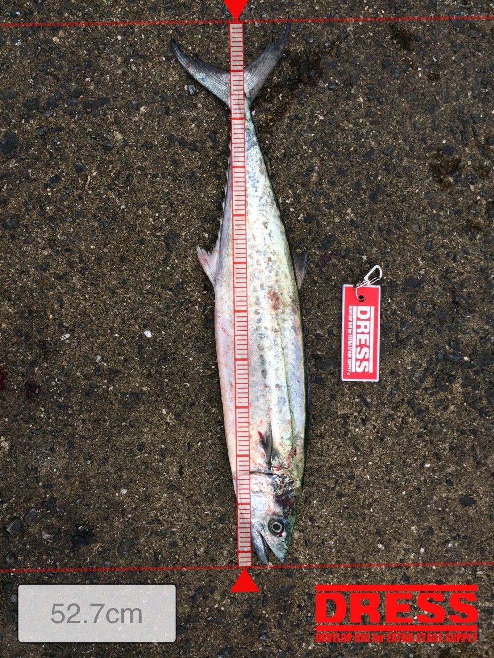 ko-heyさんの投稿画像,写っている魚はサワラ