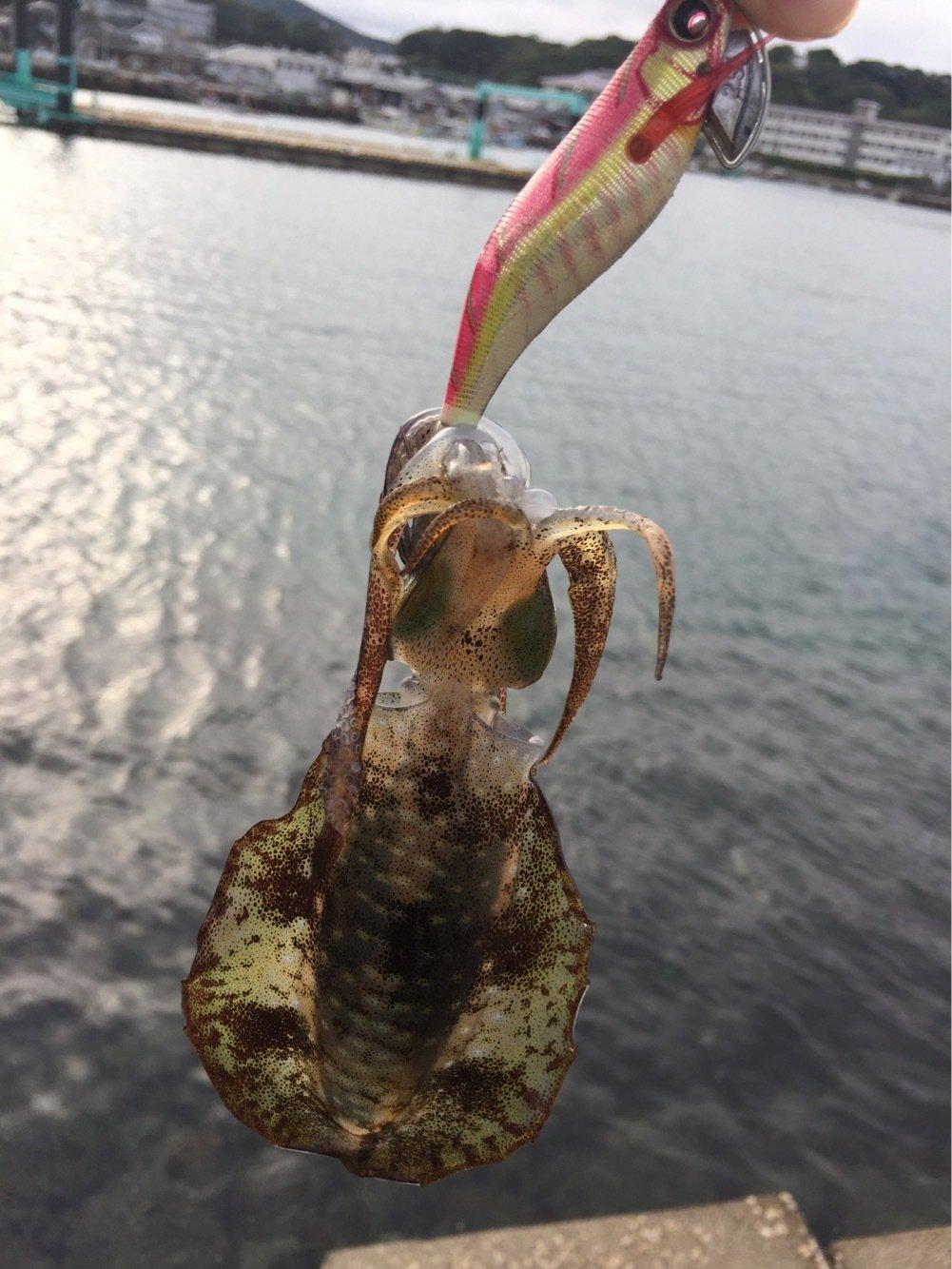 そーすけさんの投稿画像,写っている魚はアオリイカ