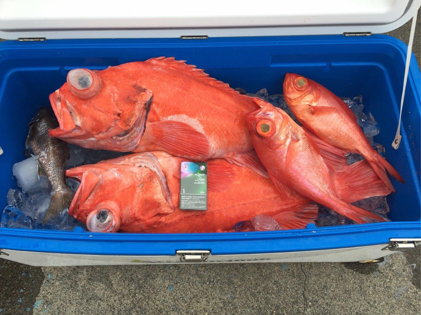 naoさんの投稿画像,写っている魚はカツオ
