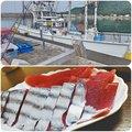 むらけいさんの和歌山県西牟婁郡での釣果写真