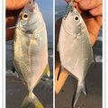 ヨウスケさんの鹿児島県西之表市での釣果写真