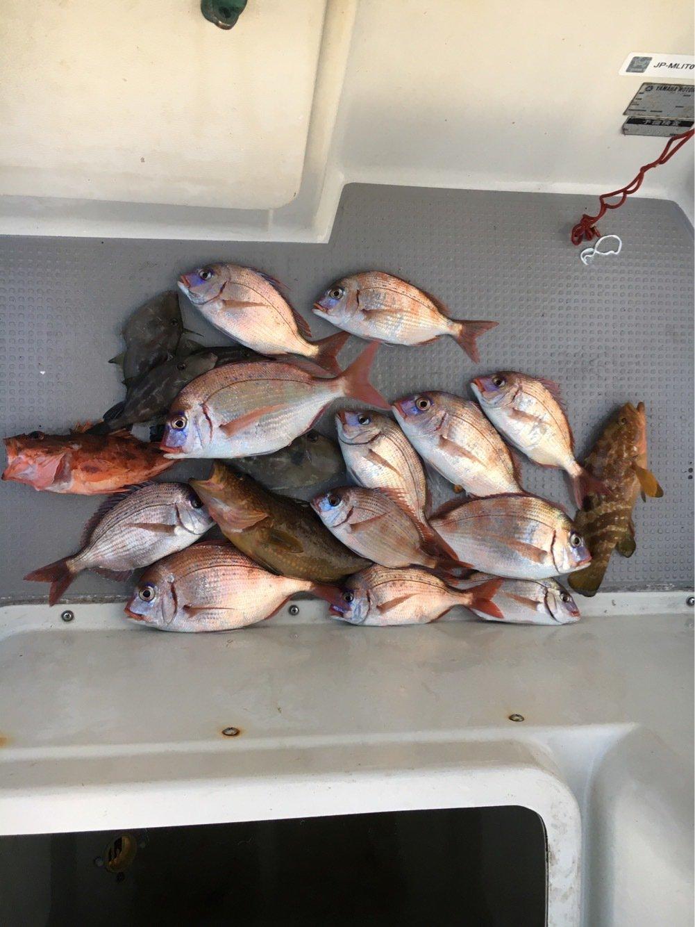 なおさんの投稿画像,写っている魚はチダイ