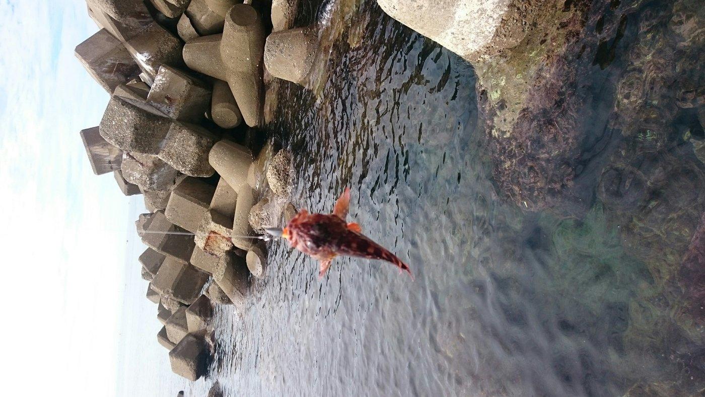 けいいちさんの投稿画像,写っている魚はカサゴ