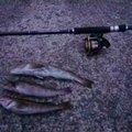 fziwaraさんの岩手県久慈市での釣果写真