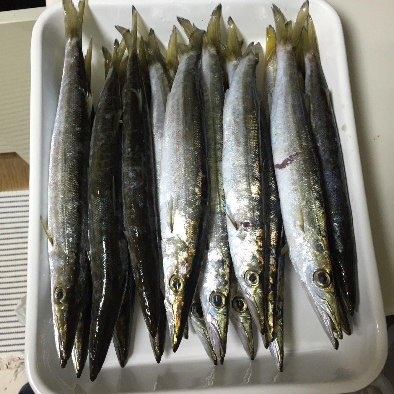 method-oneさんの投稿画像,写っている魚はカマス