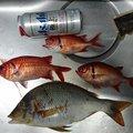ソラさんの鹿児島県西之表市での釣果写真