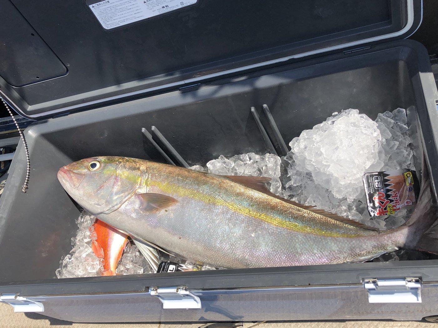 薩摩 遊漁船団 糸さんの投稿画像,写っている魚はカンパチ